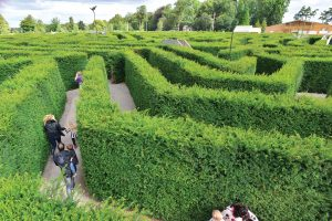 Stockeld Park Maze Families Exploring